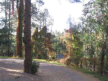 Accommodation Pinos Altos - Bear Creek Motel & Cabins